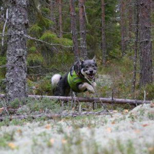 Metsästys